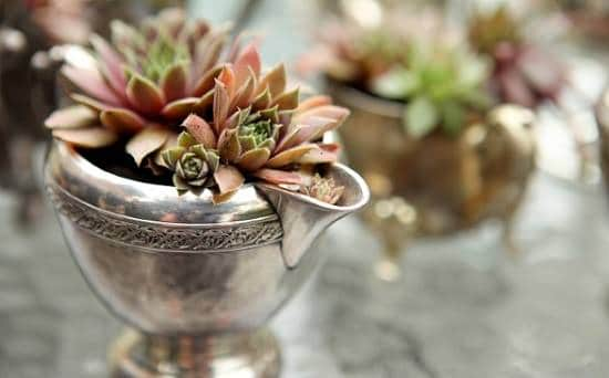 DIY Silver Planter Ideas you might not be aware of