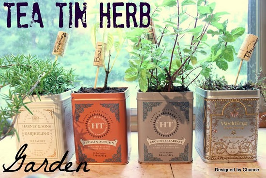 Growing Herbs In Tin Cans 14 Diy