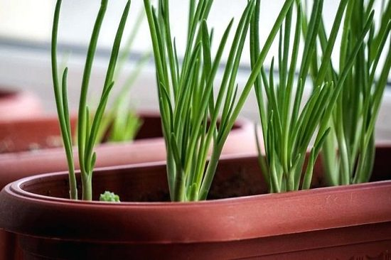 12 Most Versatile Vegetables & Herbs Every Container Gardener Must Grow