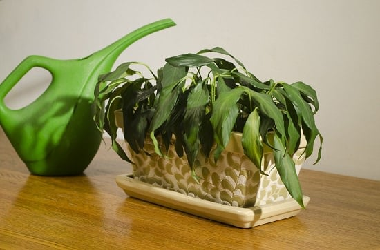 Poor Drainage is affecting your indoor plants