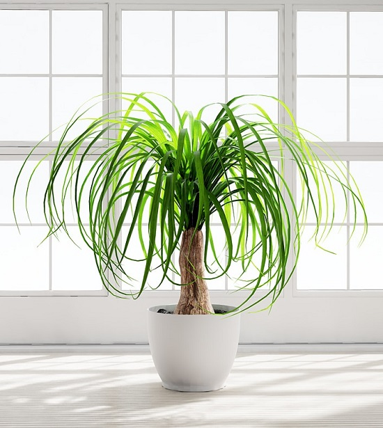 Best houseplants for children's room