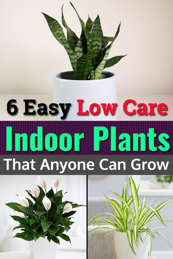 6 Easy Low Care Indoor Plants That Anyone Can Grow Balcony