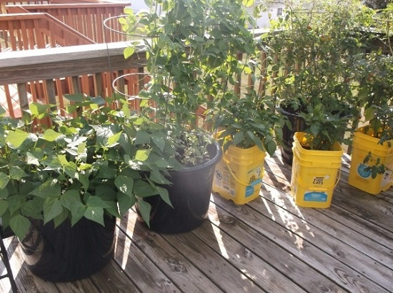 cat litter bucket gardening