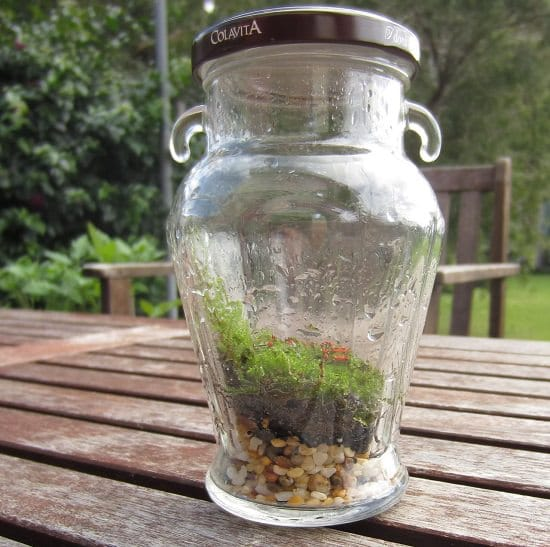 DIY Closed Terrarium Ideas 4