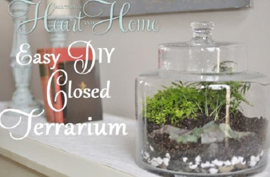 DIY Closed Terrarium Ideas 5