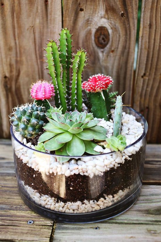 DIY Indoor Gardening Projects 4