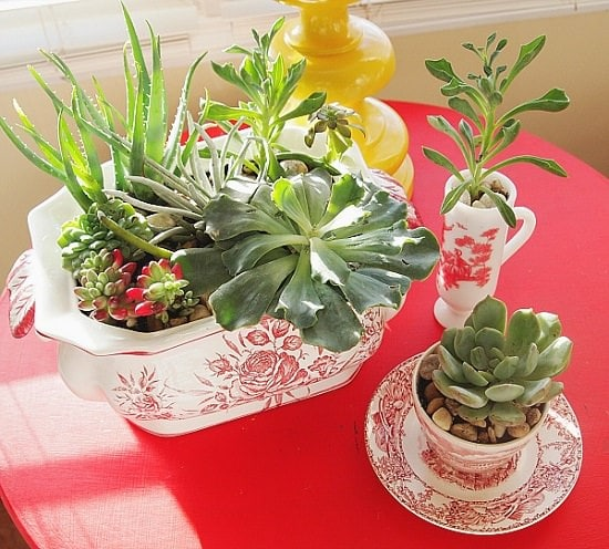 DIY Indoor Gardening Projects 5