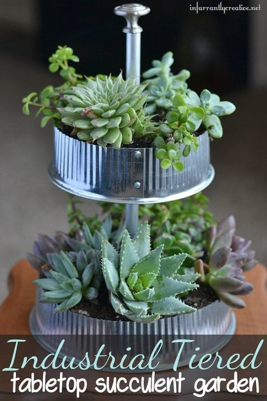 DIY Indoor Gardening Projects 9