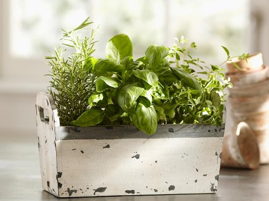 DIY Indoor Gardening Projects 11