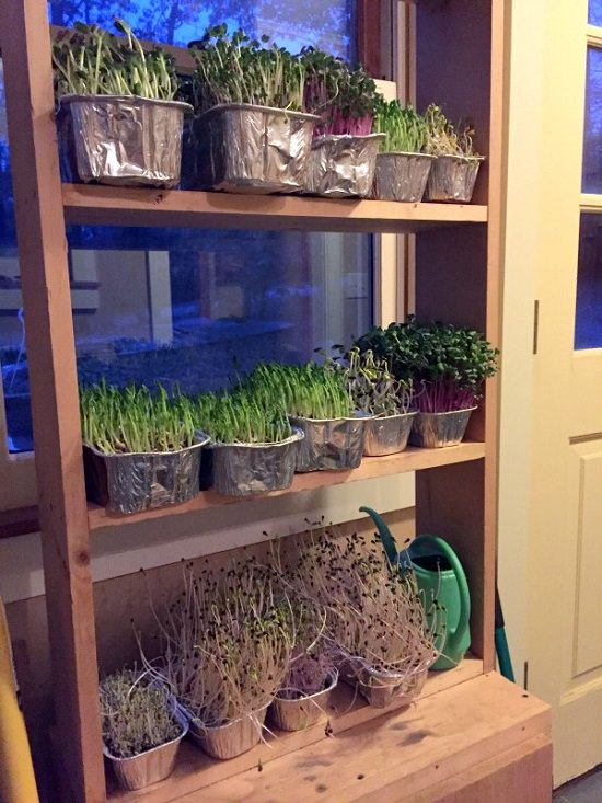 DIY Indoor Gardening Projects 12