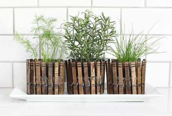 DIY Indoor Gardening Projects for indoor garden