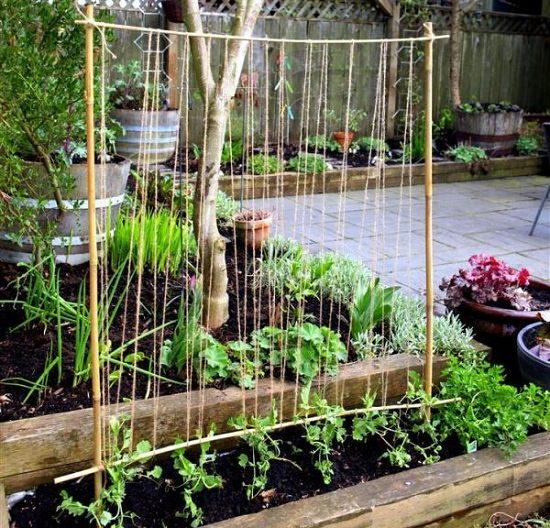 diy pea trellis ideas