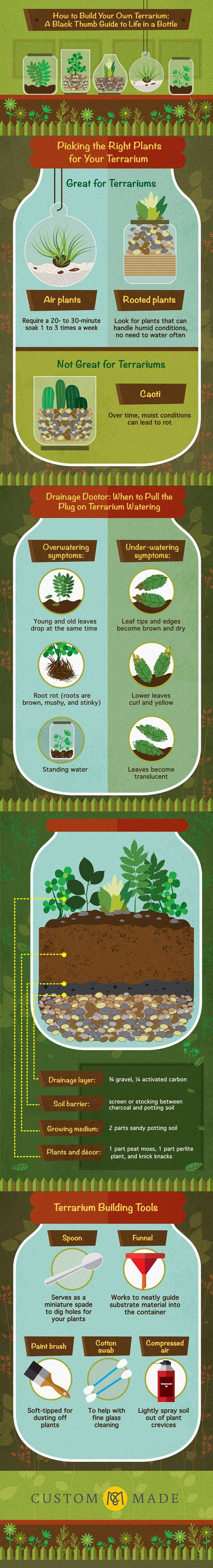 How To Make A Terrarium Everything In 11 Infographics Balcony