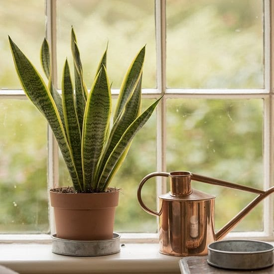 Snake Plant Benefit proven in research