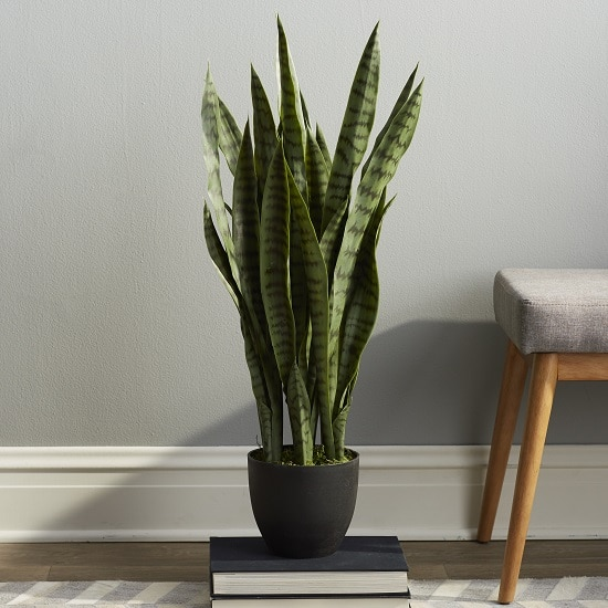benefits of snake plant