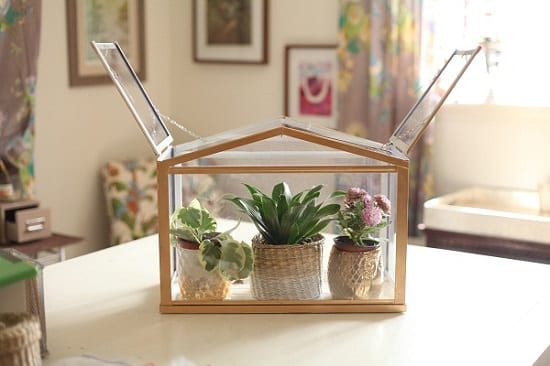 mini indoor greenhouse ideas