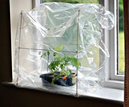 diy mini indoor greenhouse