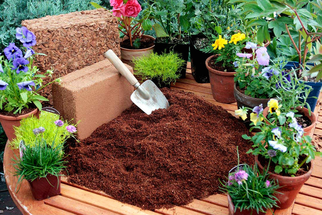 How To Use Coco Peat In Garden+Coco Peat Benefits Proven