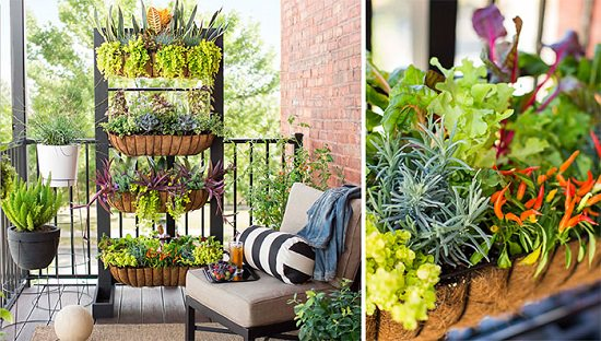 vertical garden ideas for balcony