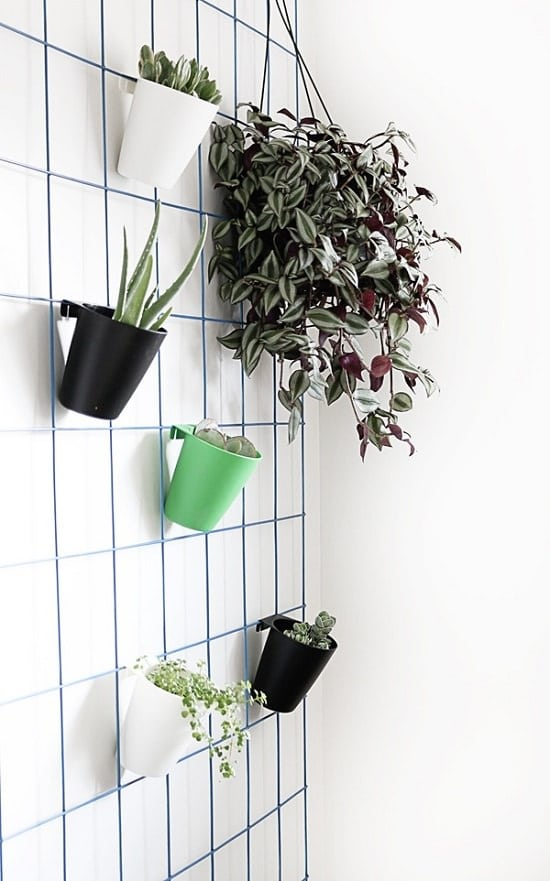 Easy Hanging Plants Wall