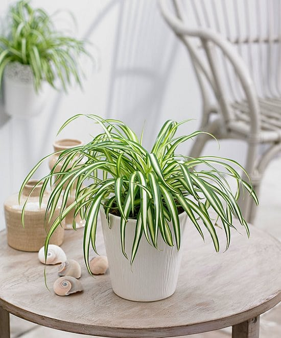 easy houseplant
