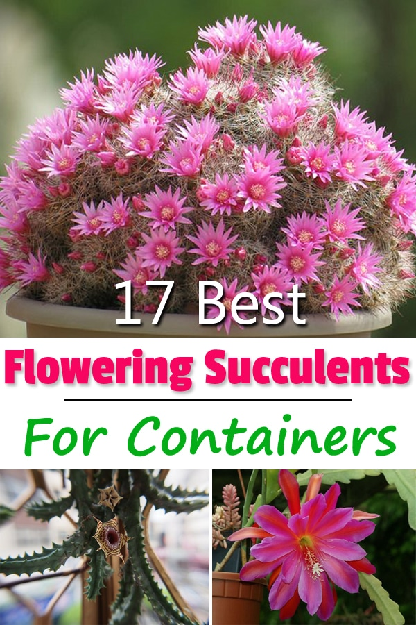 Know the names of 17 Best Flowering Succulents that you can grow indoors and outdoors for their intriguing texture, foliage, and flowers.