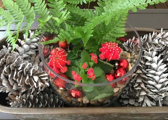 Make your own Christmas terrarium