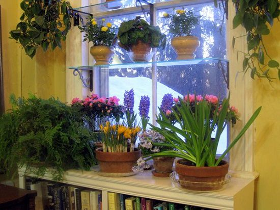 If you have got a limited outdoor space, it's important to utilize every bit of it. Don't miss windows either! Check out 16 DIY Indoor Window Garden Ideas for inspiration.