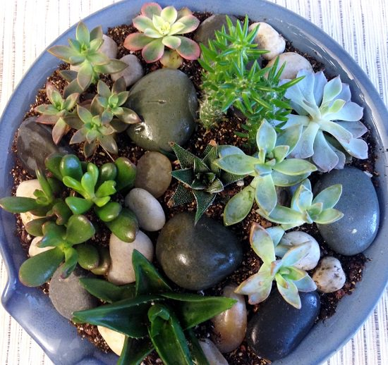 18 Indoor Rock Garden Ideas How To Make An Indoor Rock Garden