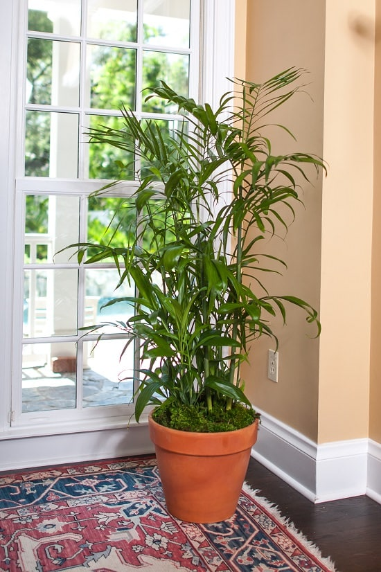 Some of the best Indoor Plants Recommended By NASA