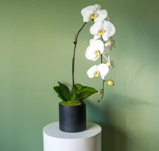 14 Amazing Positive Energy Plants For Home Amp Office
