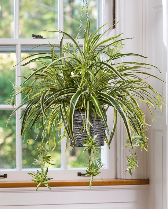 Indoor Plants According to Zodiac Signs 4