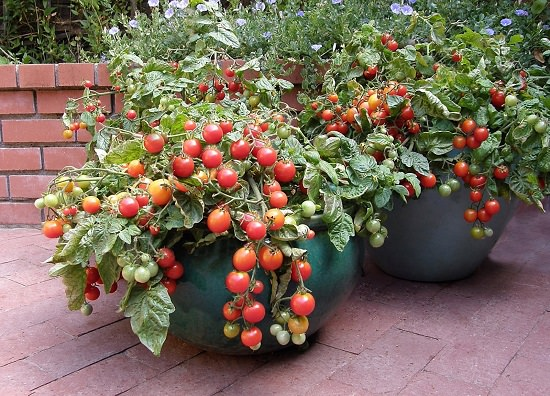 Ask yourself theseGardening Questions if you're a container gardener.This will help you in creating a healthy container garden that you desire.