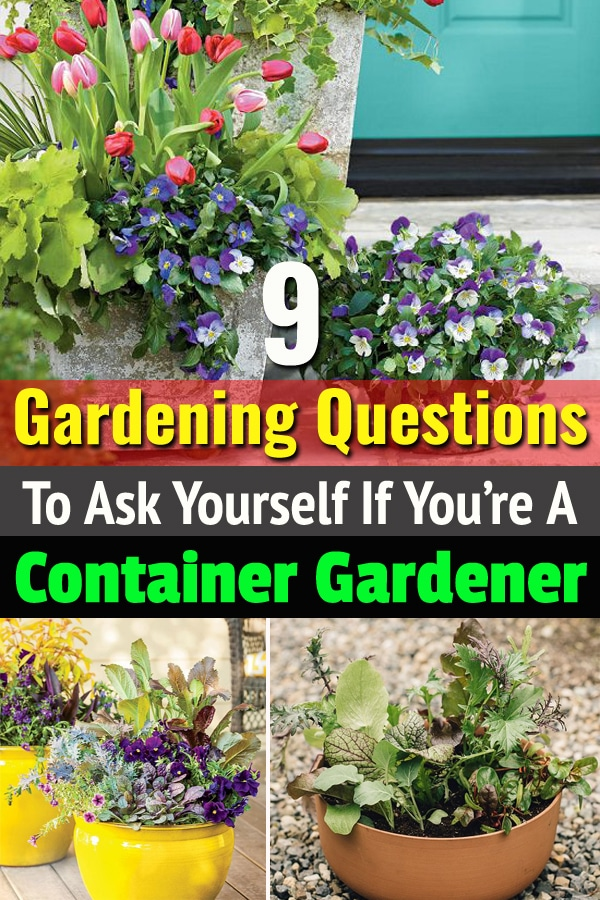 Ask yourself these Gardening Questions if you're a container gardener. This will help you in creating a healthy container garden that you desire.