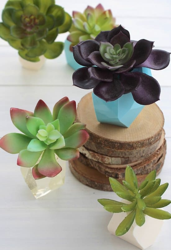 geometric succulent for spring