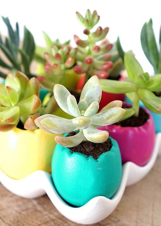 Easter egg spring succulent planters