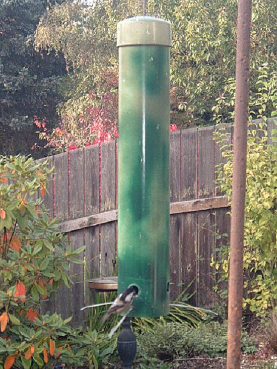 If squirrels are eating the portion of your feathered friends from feeders, try to introduce one of these DIY Squirrel Proof Bird Feeder Ideas.