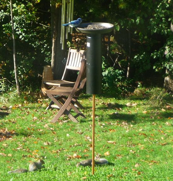 diy squirrel proof bird feeder ideas