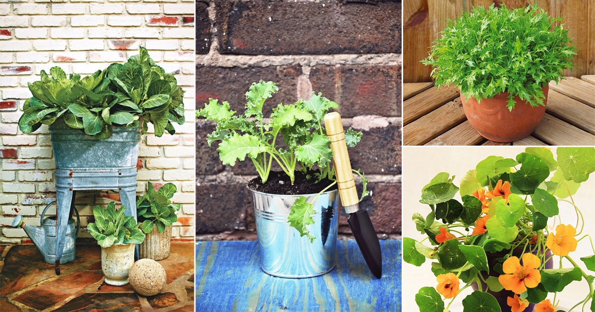 Grow 22 Best Green Leafy Vegetables In Containers For Salad Balcony Garden Web