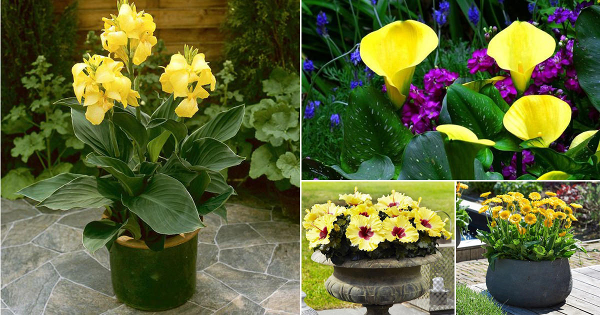 42 Types Of Yellow Flowers For Garden Plants With Yellow