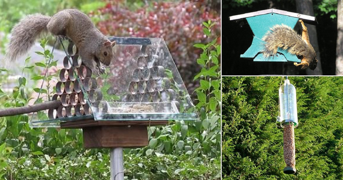 8 Diy Squirrel Proof Bird Feeder Ideas Balcony Garden Web