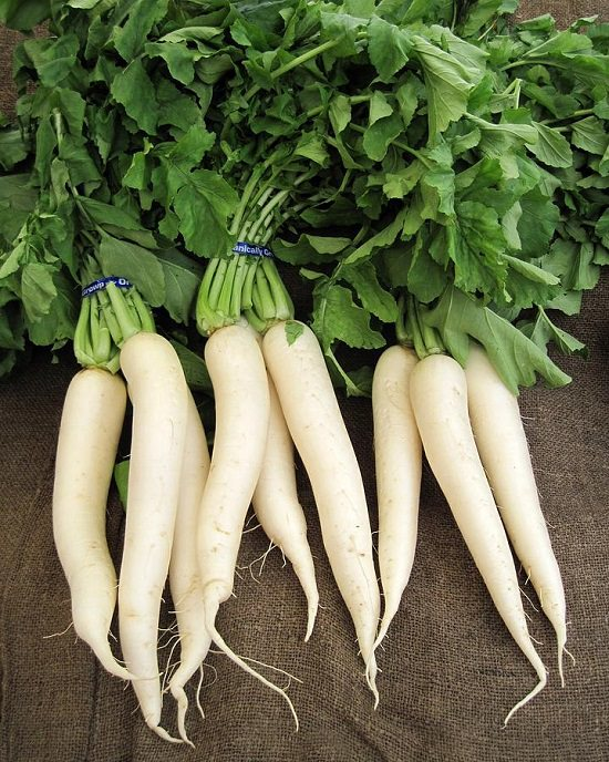20 types of radishes
