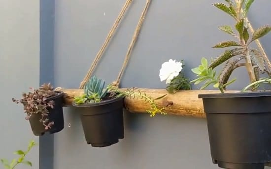 DIY vertical planter from a Bamboo pole