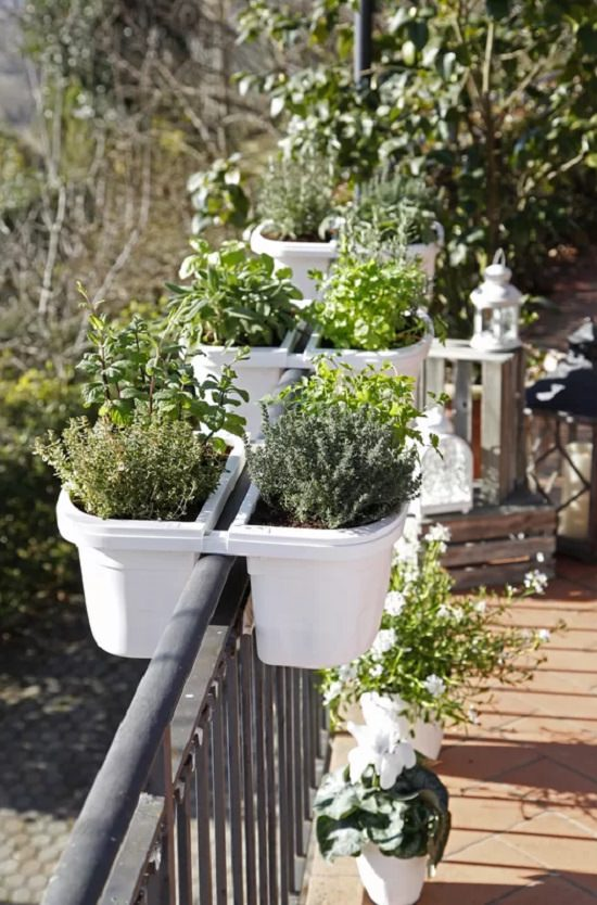 Grow Herbs In Hanging Planters