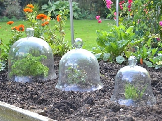 DIY Garden Cloche Ideas 7