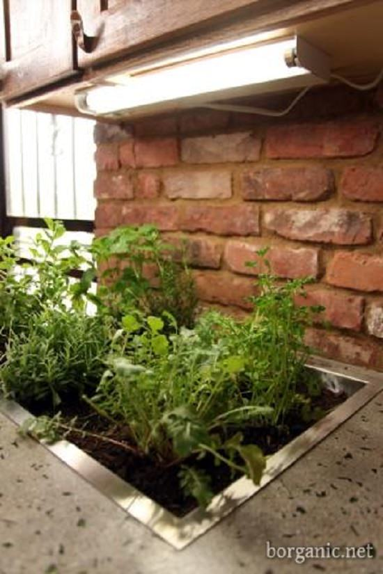 11 Kitchen Countertop Herb Garden Ideas For Apartment Living
