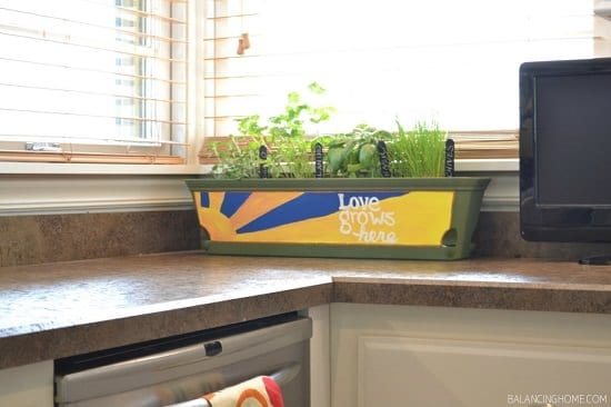 growing herbs indoors in a kitchen