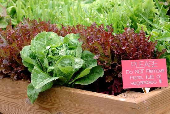 best leafy green vegetables to grow in containers