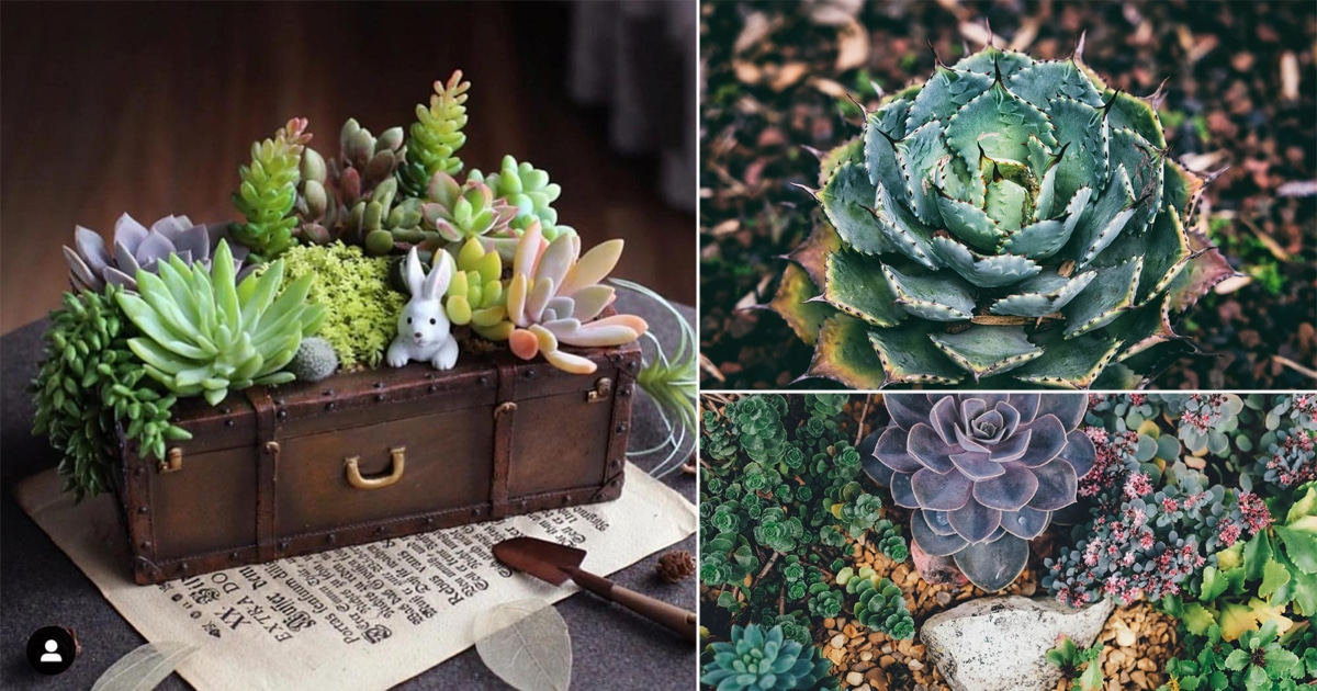 Everything About Growing Succulents In 8 Infographics Balcony Garden Web