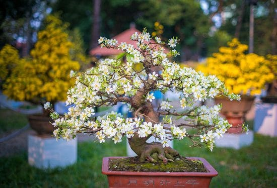 Bonsai Tree Care Tips